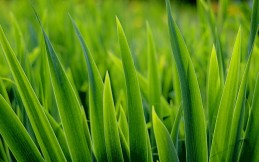 Lawn Watering Tips
