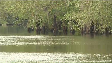 Waccamaw River