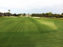 No need for overseed: Endurant FW turf colorant applied at the Club at the Strand.