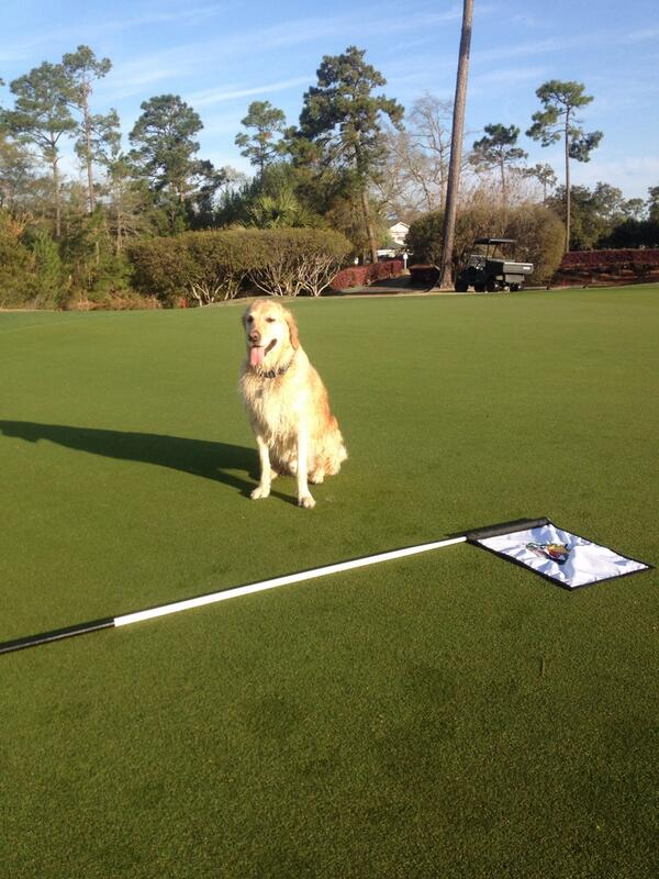Billie changing cups on the golf course. Entered in Geoponics WIldlife Photo contest for a chance to win a sample of Endurant FW, turf colorant for fairways, or other prizes