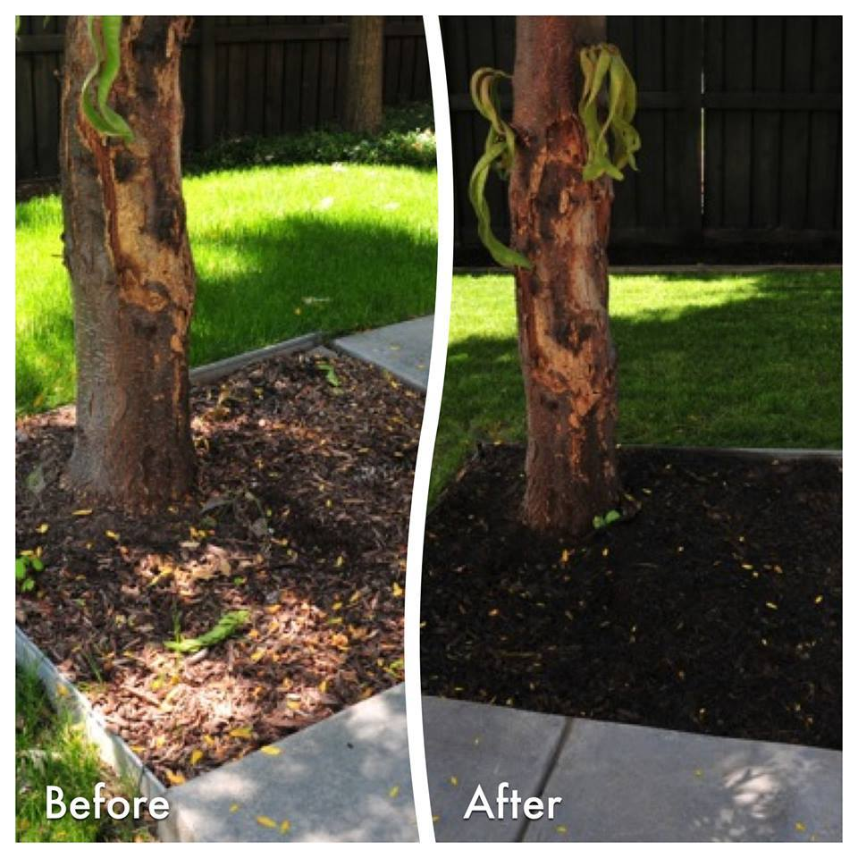 Black mulch colorant adds contrast when painted on faded mulch