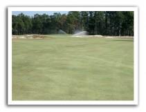 Endurant turf colorant gets Pinehurst through tough winter & into limelight of U.S. Open