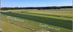 Endurant Turf Colorant on horse track instead of overseed