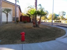 California drought leads to brown lawns until business launches with eco friendly, water saving solution