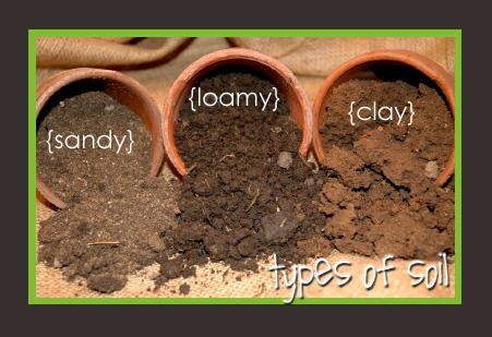 Soil type helps determine proper watering guidelines
