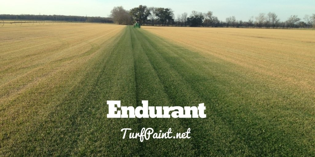 Turf Paint Field Day with Endurant