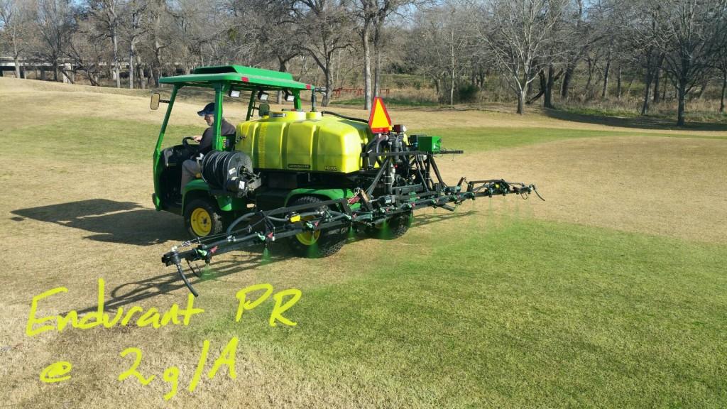 Endurant PR perennial rye grass colorant