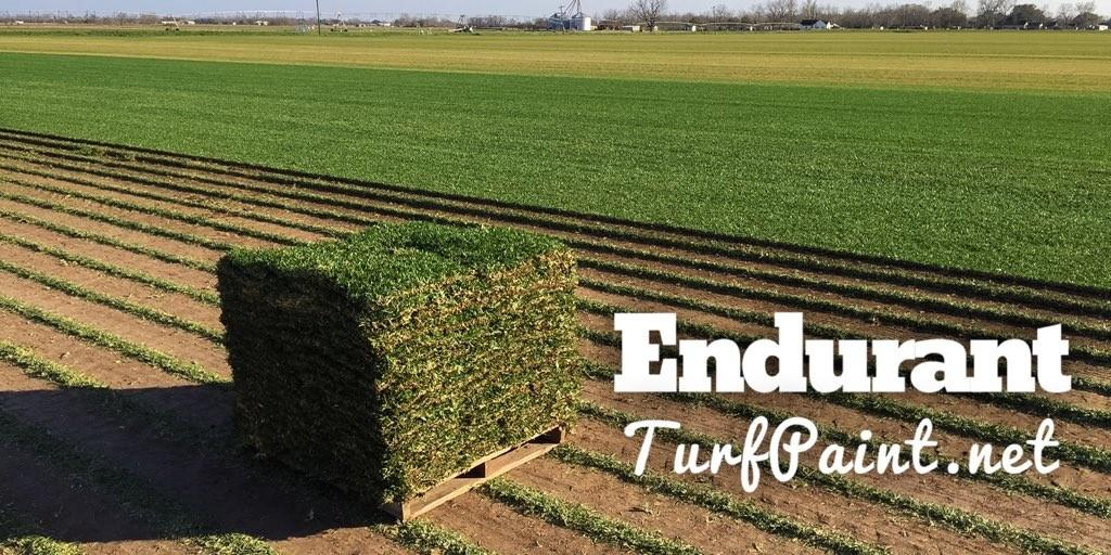 Turf Grass Field Day Sod Farm