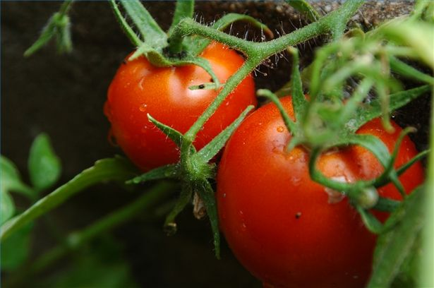 Carbotein for agricultural farms and home gardens