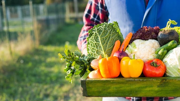 Plant nutrition for food growing